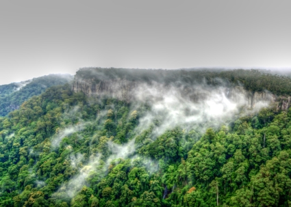 clifface springbrook