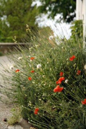 Provence roadside