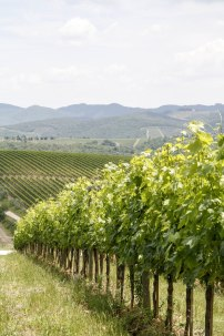 Winery Tuscany Region Italy