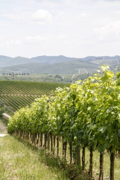 Winery Tuscany Region Italy