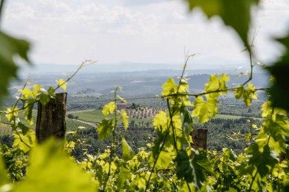Near Sienna Tuscany