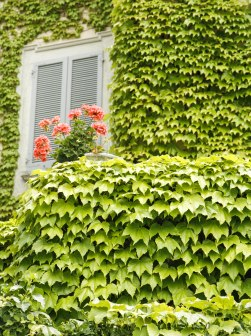 Looking up at