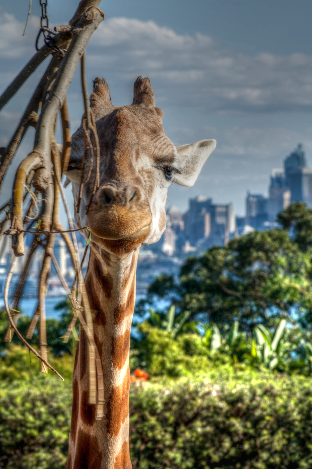 A Visit to the Zoo – Sydney 2014