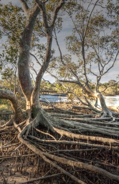 Boree Bodalla Mangrove Reserve