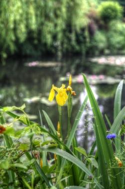 Iris Monets Garden