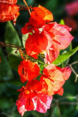 flower power-2