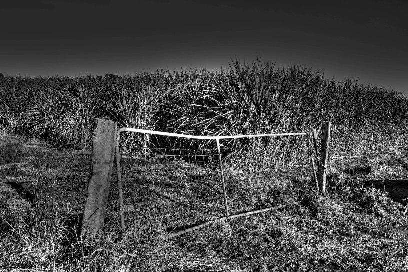Sugar cane gate