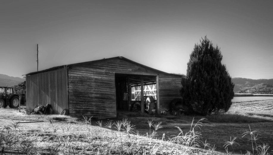 Old shed Murwillumbah