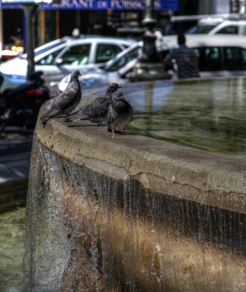 paris-pigeons