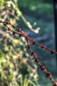 Old barbed wire fence