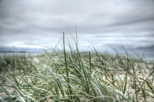 grass beach