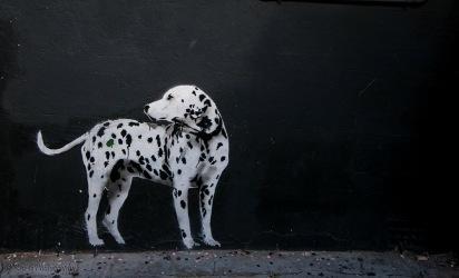 Spot the Dog sydney