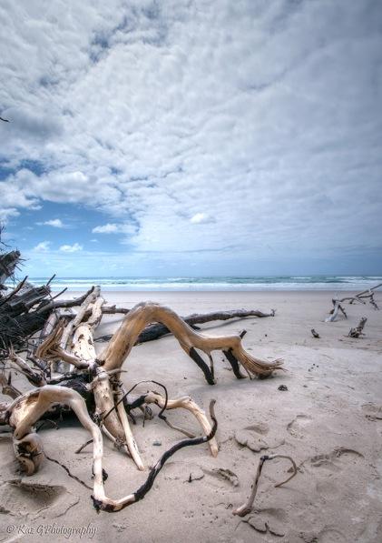 fingal-beach-driftwood2