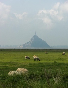 sheep-mont-st-michel