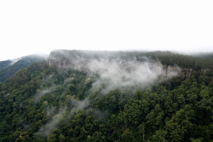 cliffface springbrook