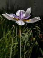 flower-mclaren-vale