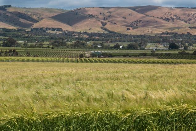 grass-blowing-mclaren-vale