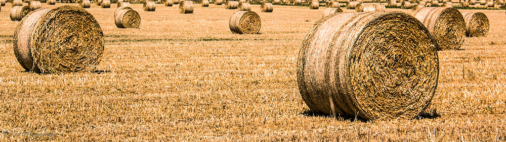 hay-bales-south-australia