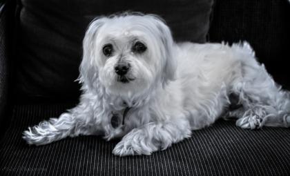 Portrait-Buffy2