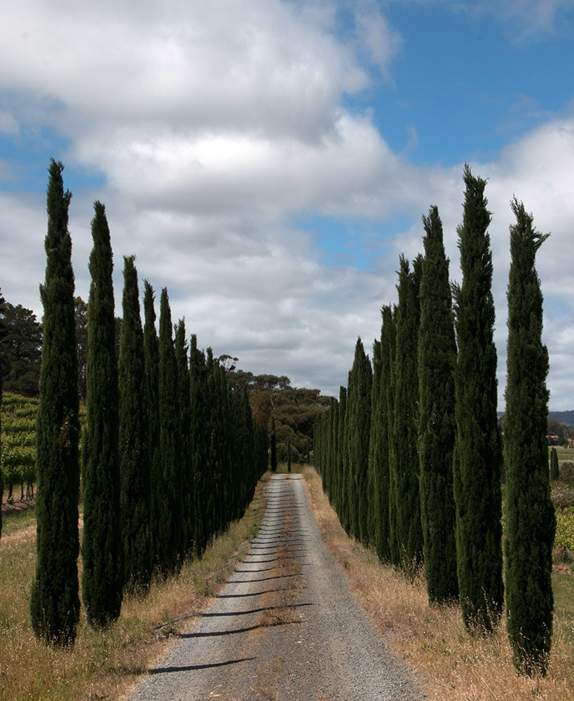 road-to-winery-mclaren-vale