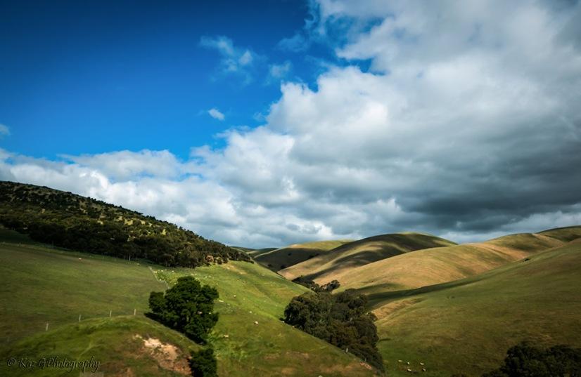 Rolling-hills-of-south-australia