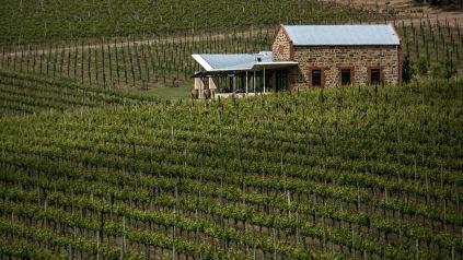 winery-mclaren-vale