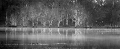 Banora wetlands BW