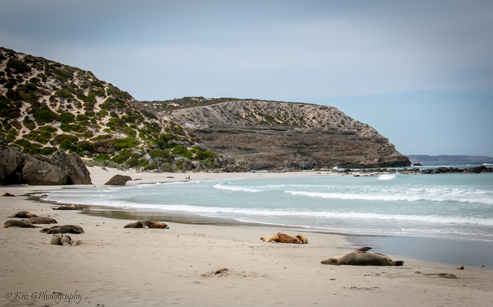 Seal Bay, Kangaroo Island, South Australia