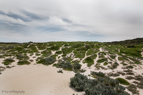 Seal Bay sand hills