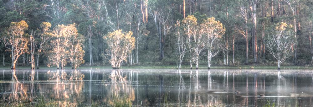 wetlands4