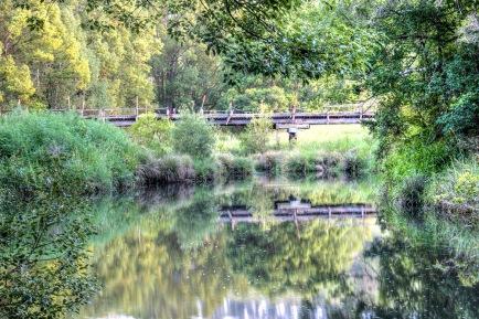 Terania Creek 5