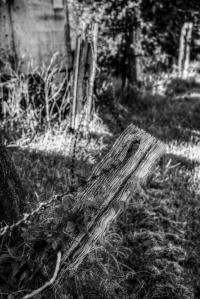 old fence post Tumbulgum