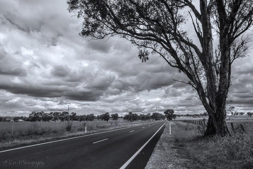 australian-bush