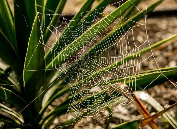 dew web