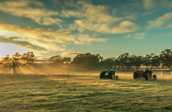 tractors in the mist 7