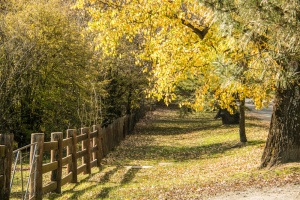 autumn-hill-end-1