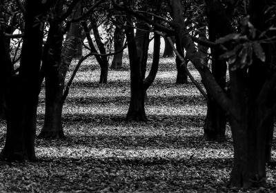 autumn-striped-carpet-1
