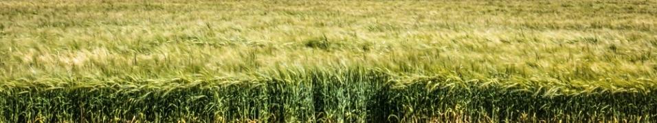 grass-wind-mclaren-vale-1