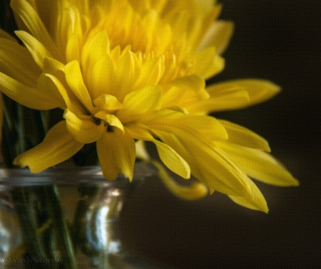 study-of-a-yellow-flower-linen