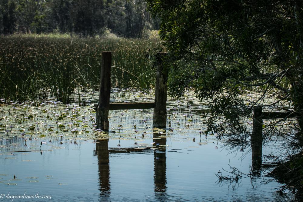 cabarita-lake-2 (1 of 1)