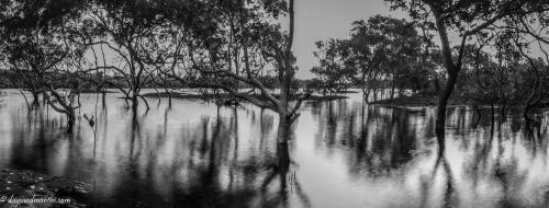 cudgen creek marsh (1 of 1)
