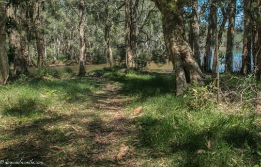 lake-cabarita-bushland (1 of 1)
