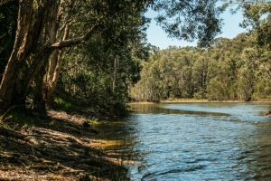 lake-cabarita-bushland2 (1 of 1)