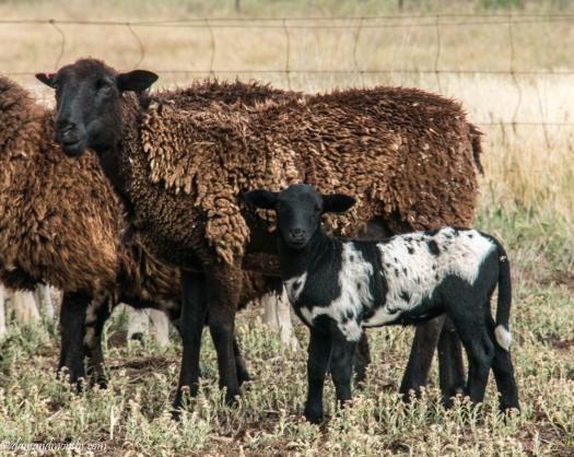 beautiful wool (1 of 1)