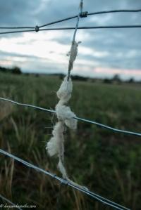 fleece (1 of 1)