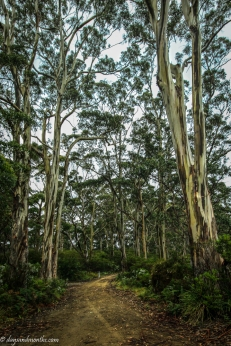 Point Puer Gums