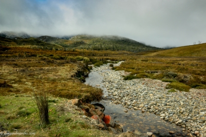 cradle mountain stream-0457