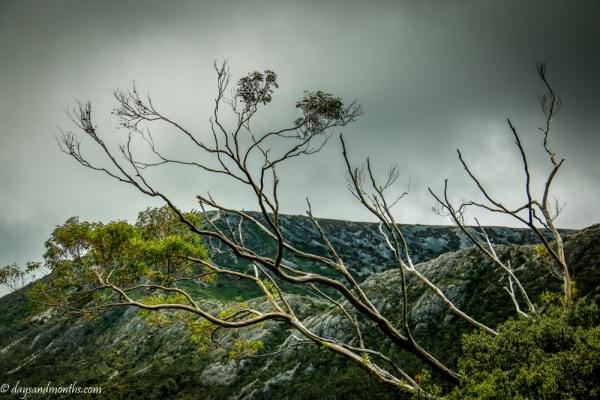flora-cradle-mountain4-