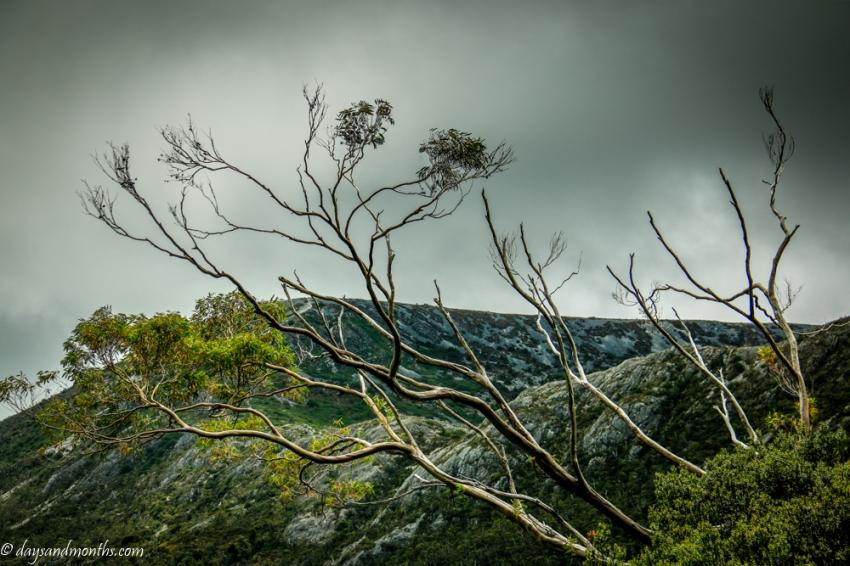 flora-cradle-mountain4-