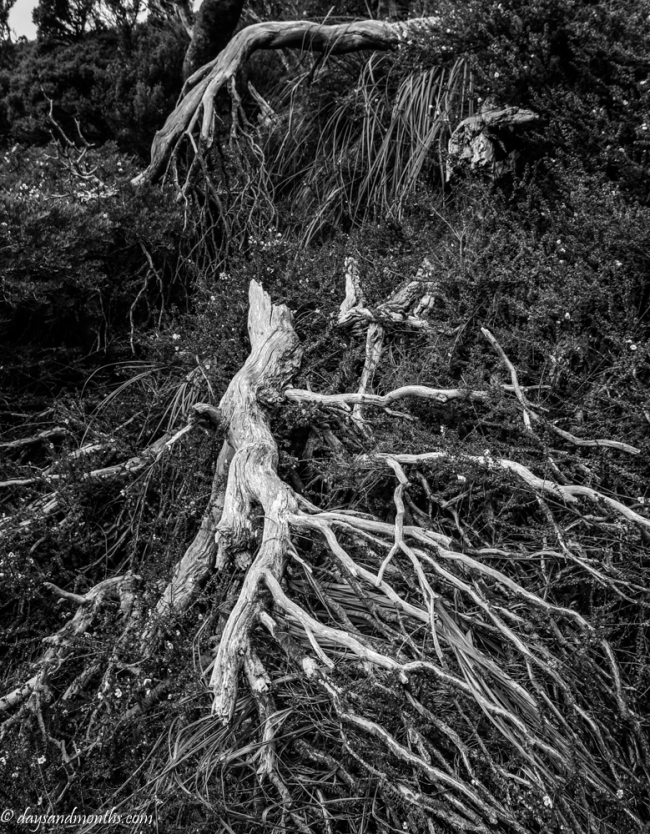roots-